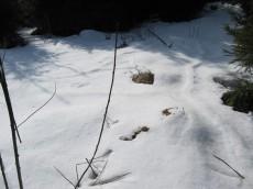 03.03. - Mäusegänge unter dem Schnee
